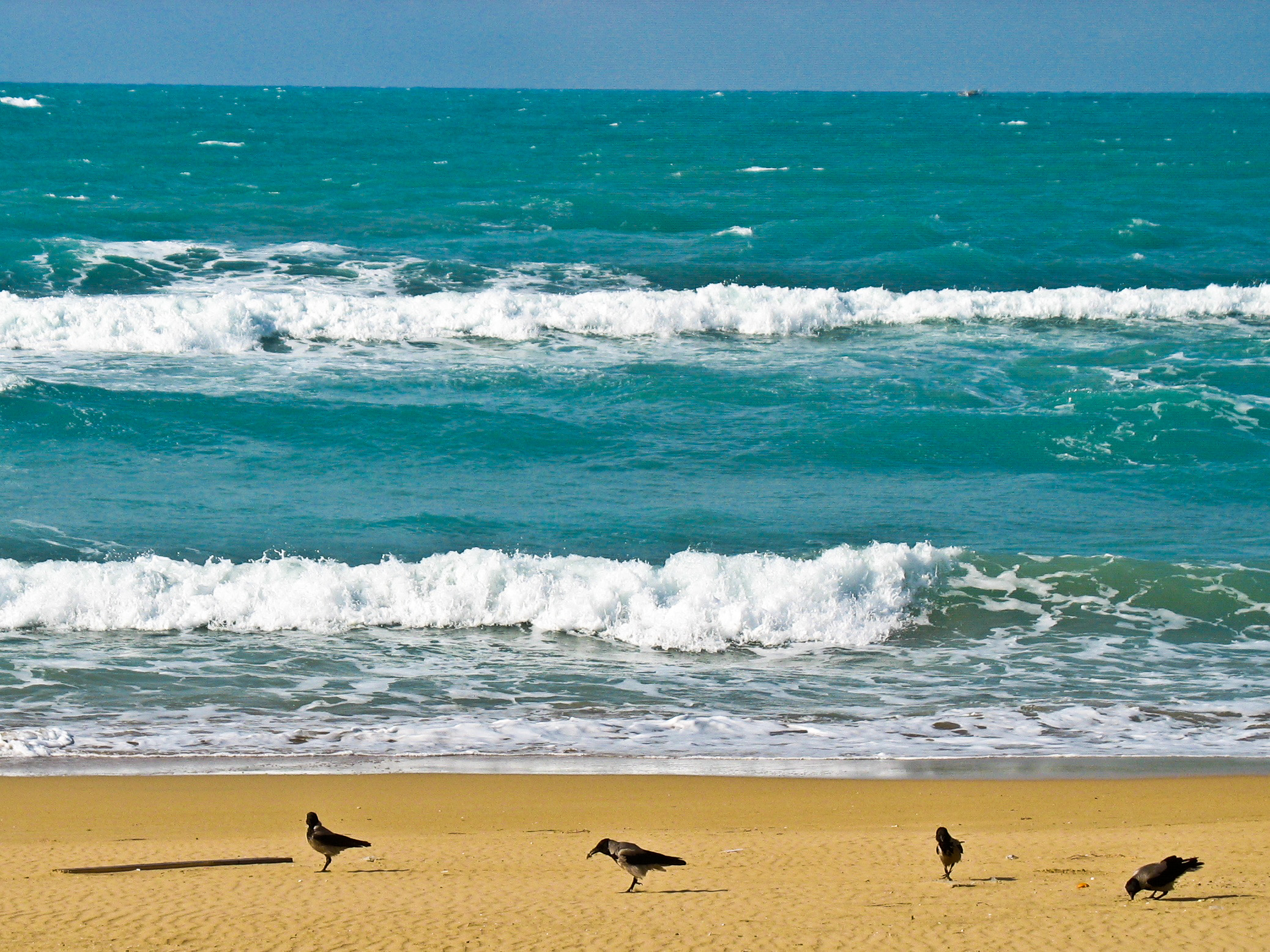Sea in Egypt with birds and waves