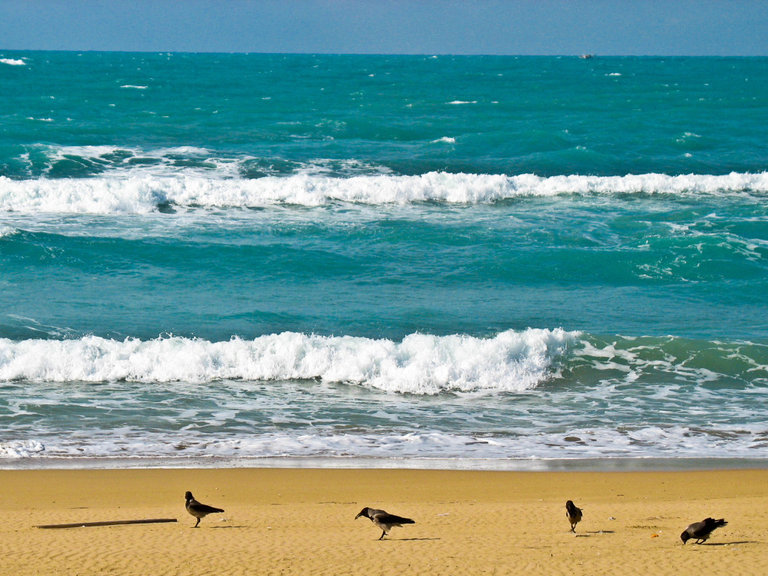 A beach in Alexandria: the sea in Egypt, with birds and waves