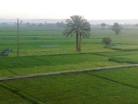 Al Ammar Al Kubra, Al Qalyubia Governorate, Egypt